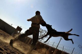 perro vigilancia Adiestramiento Zaragoza Semper Fidelis
